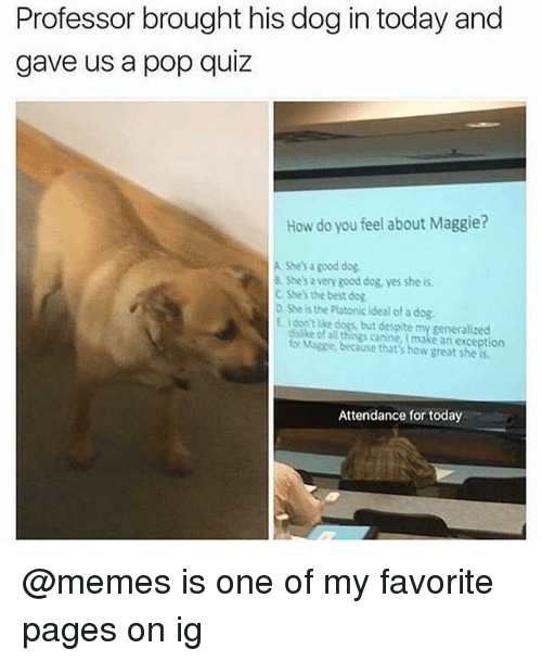 Dogs, Funny, and Memes: Professor brought his dog in today and  gave us a pop quiz  How do you feel about Maggie?  A She's a good dog  & She's a very good dog, yes she is  C Shes the best dog  2 She is the Platonic Ideal of a dog.  E. tdon't ake dogs, but despite my generalized  ke of al things canine, I make an exception  Massie, because that's how great she is  Attendance for today @memes is one of my favorite pages on ig