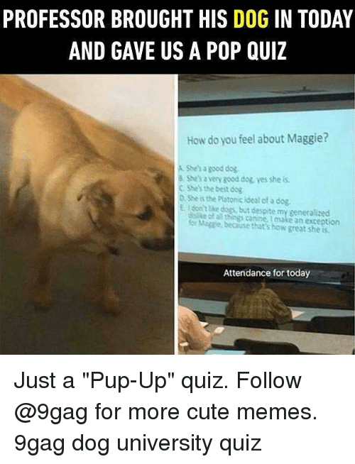 "9gag, Cute, and Dogs: PROFESSOR BROUGHT HIS DOG IN TODAY  AND GAVE US A POP QUIZ  How do you feel about Maggie?  A Shesa good dog  8 She's a very good dog, yes she is  C SSes the best dog  D She is the Plotonic Ideal of a dog.  EI dont e dogs, but despite my generalizecd  dalike of a things canine, I make an exception  or Migsie, because that's how great she is  Attendance for today Just a ""Pup-Up"" quiz. Follow @9gag for more cute memes. 9gag dog university quiz"