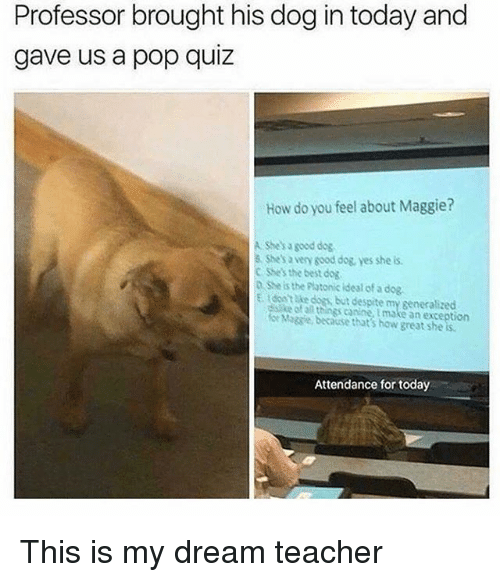 Pop, Teacher, and Best: Professor brought his dog in today and  gave us a pop quiz  How do you feel about Maggie?  A Shes a good dog  8 Shes a very sood dog, yes she is  C Shes the best dog  n she is the Platonic ideal of a dog  E tdon take doss but despite my generalized  distike of a things caninemake an exception  e Magsie becouse that's how great sheis.  Attendance for today This is my dream teacher