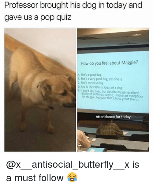 Dogs, Memes, and Pop: Professor brought his dog in today and  gave us a pop quiz  How do you feel about Maggie?  A Shes a geod dog  8 She's a very good dog, yes she is  C Shes the best dog  D She is the Platonic ideal of a dog.  E. Idon't like dogs, but despite my generalized  ke  for Maggie, because that's how great she  of al things canine, I make an exception  Attendance for today @x__antisocial_butterfly__x is a must follow 😂