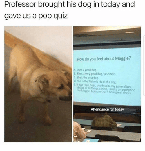 Dogs, Memes, and Pop: Professor brought his dog in today and  gave us a pop quiz  How do you feel about Maggie?  A She's a good dog  B She's a very good dog yes she is  C She's the best dog  o She is the Platonic ideal of a dog  E , don't ike dogs, but despite my generalized  e of al things canine, I make an exception  Mapie, because that's how great she  Attendance for today