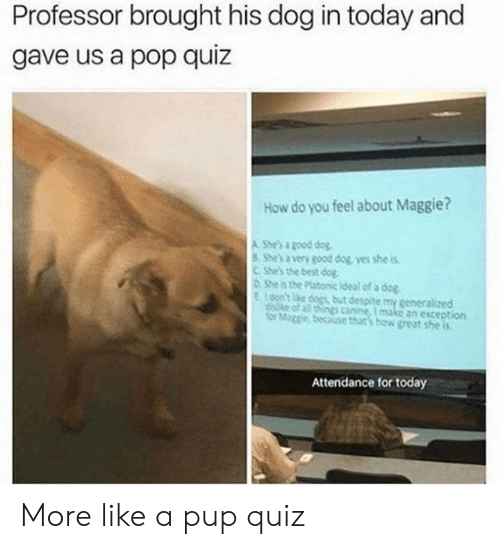 canine: Professor brought his dog in today and  gave us a pop quiz  How do you feel about Maggie?  A She's a good dog  She's a very good dog yes she is  CShe's the best dog  0 She is the Platonic ideal of a dog  Eon't ke dogs but despite my generalized  diske of all things canine, I make an exception  for Mage because that's how great she is  Attendance for today More like a pup quiz