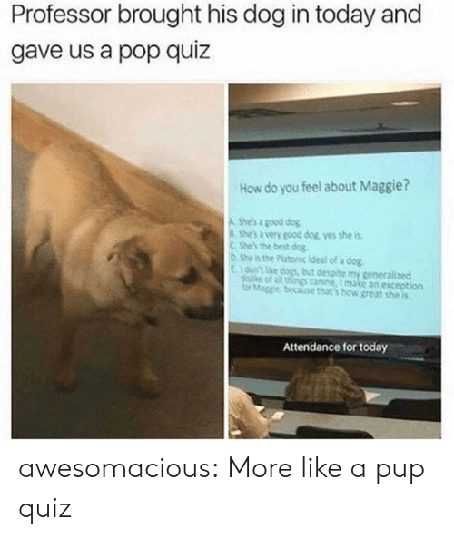 canine: Professor brought his dog in today and  gave us a pop quiz  How do you feel about Maggie?  A She's a good dog  She's a very good dog yes she is  CShe's the best dog  0 She is the Platonic ideal of a dog  Eon't ke dogs but despite my generalized  diske of all things canine, I make an exception  for Mage because that's how great she is  Attendance for today awesomacious:  More like a pup quiz