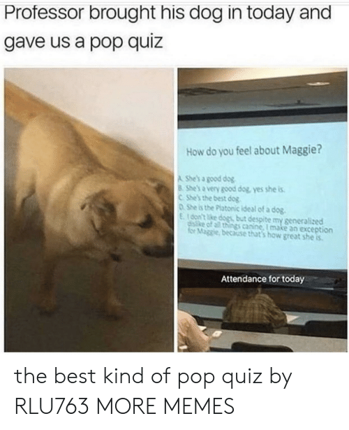 canine: Professor brought his dog in today and  gave us a pop quiz  How do you feel about Maggie?  A She's a good dog  8 She's a very good dog, yes she is  CShe's the best dog  DShe is the Platonic ideal of a dog.  E16on't ke dogs but despite my generalized  disike of all things canine, I make an exception  for Maggie, because that's how great she is  Attendance for today the best kind of pop quiz by RLU763 MORE MEMES