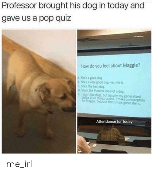canine: Professor brought his dog in today and  gave us a pop quiz  How do you feel about Maggie?  A She's a good dog  8 She's a very good dog, yes she is  CShe's the best dog  0She is the Platonic ideal of a dog.  E100n't ke dogs but despite my generalized  disike of all things canine, I make an exception  for Maggie, because that's how great she is  Attendance for today me_irl