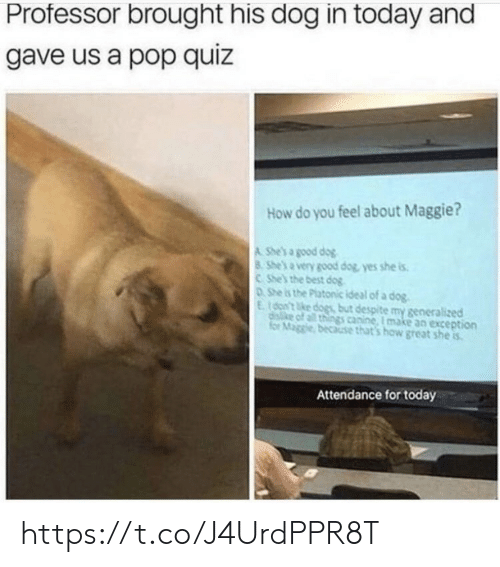 Dogs, Memes, and Pop: Professor brought his dog in today and  gave us a pop quiz  How do you feel about Maggie?  A She's a good dog  8 She's a very good dog yes she is  C She's the best dog  0She is the Platonic ideal of a dog  E(o't ke dogs but despite my generalized  diske of all things canine, I make an exception  for Maggle because that's how great she is  Attendance for today https://t.co/J4UrdPPR8T