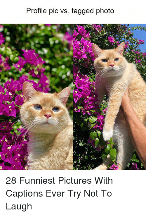 Pictures, Tagged, and Photo: Profile pic vs. tagged photo 28 Funniest Pictures With Captions Ever Try Not To Laugh