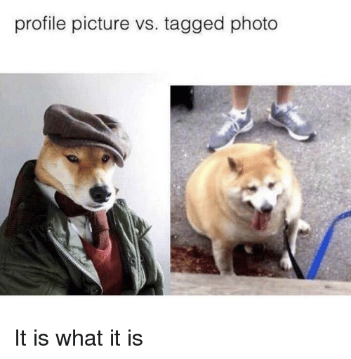 it is what it is: profile picture vs. tagged photo It is what it is