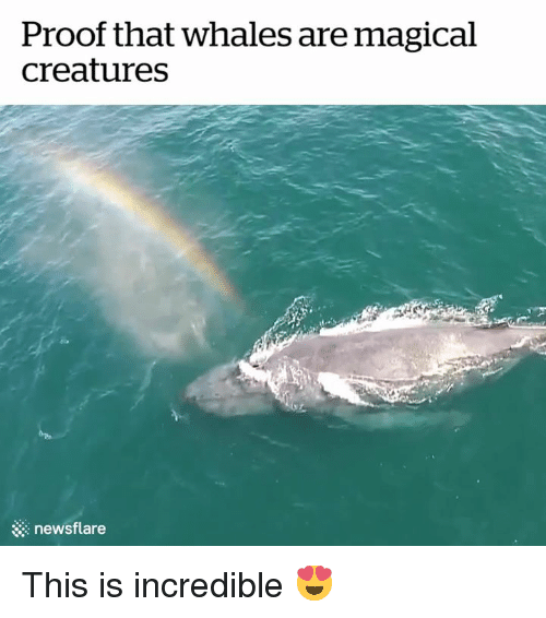 Creatures, Proof, and Whales: Proof that whales are magical  creatures  & newsflare This is incredible 😍