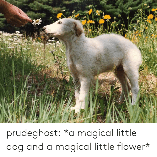 magical: prudeghost:  *a magical little dog and a magical little flower*