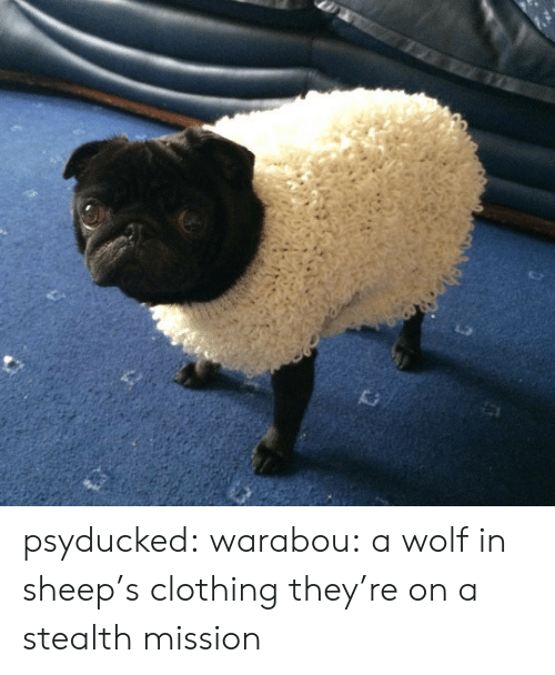 sheep: psyducked:  warabou:  a wolf in sheep's clothing  they're on a stealth mission