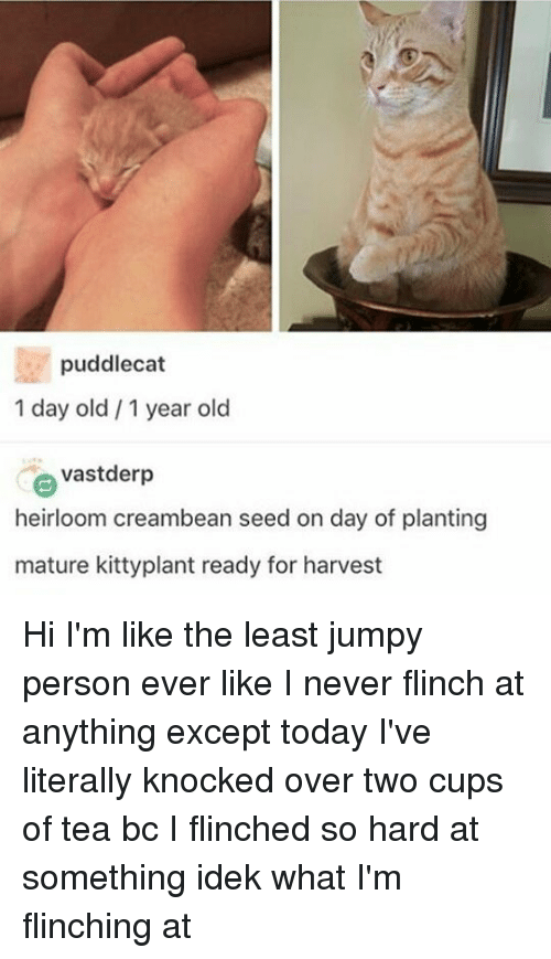 jumpy: puddlecat  1 day old 1 year old  e vastderp  heirloom creambean seed on day of planting  mature kittyplant ready for harvest Hi I'm like the least jumpy person ever like I never flinch at anything except today I've literally knocked over two cups of tea bc I flinched so hard at something idek what I'm flinching at