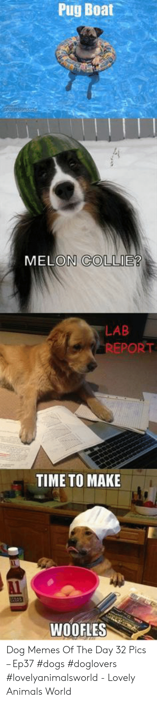 Animals, Dogs, and Memes: Pug Boat  MELON COLLIE?  LAB  REPORT  TIME TO MAKE  WOOFLES Dog Memes Of The Day 32 Pics – Ep37 #dogs #doglovers #lovelyanimalsworld - Lovely Animals World