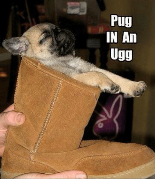 Uggly: Pug  IN An  Ugg