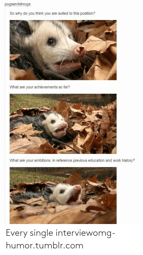 Ambitions: pugsandshrugs:  So why do you think you are suited to this position?  What are your achievements so far?  What are your ambitions. in reference previous education and work history? Every single interviewomg-humor.tumblr.com