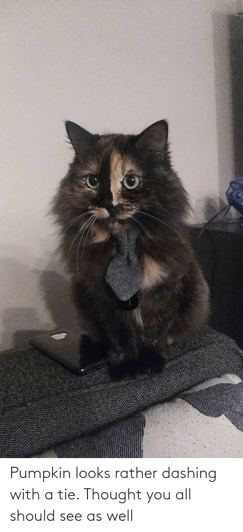 Pumpkin: Pumpkin looks rather dashing with a tie. Thought you all should see as well