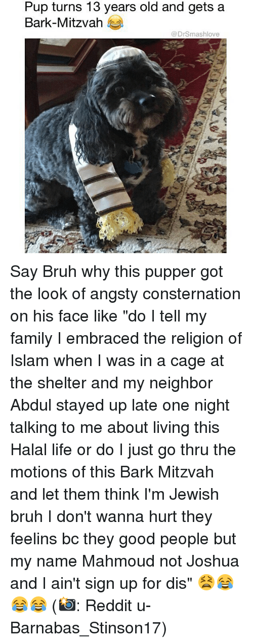 "halal: Pup turns 13 years old and gets a  Bark-Mitzvah  @DrSmashlove Say Bruh why this pupper got the look of angsty consternation on his face like ""do I tell my family I embraced the religion of Islam when I was in a cage at the shelter and my neighbor Abdul stayed up late one night talking to me about living this Halal life or do I just go thru the motions of this Bark Mitzvah and let them think I'm Jewish bruh I don't wanna hurt they feelins bc they good people but my name Mahmoud not Joshua and I ain't sign up for dis"" 😫😂😂😂 (📸: Reddit u-Barnabas_Stinson17)"