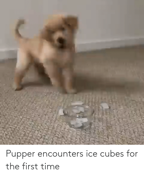Ice Cubes: Pupper encounters ice cubes for the first time