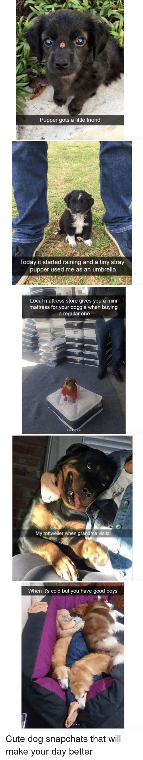 gots: Pupper gots a little friend   Today it started raining and a tiny stray  pupper used me as an umbrella   Local mattress store gives you a mini  mattress for your doggie when buying  a regular one   My rottweiler when grandma visits   When it's cold but you have good boys <p>Cute dog snapchats that will make your day better<br/></p>