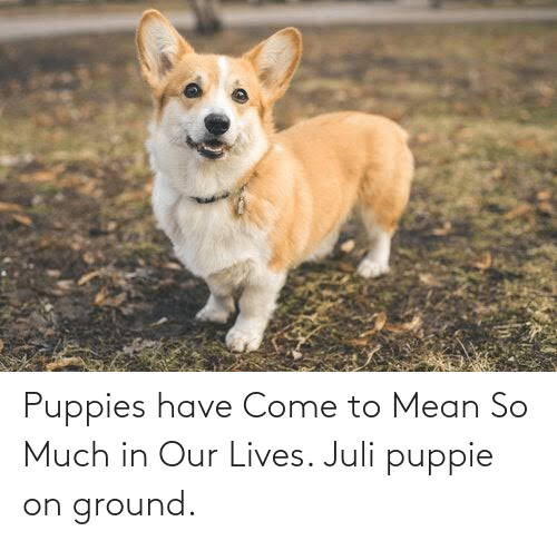Juli: Puppies have Come to Mean So Much in Our Lives. Juli puppie on ground.
