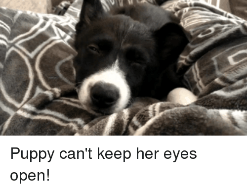 Puppy, Her, and Open: Puppy can't keep her eyes open!