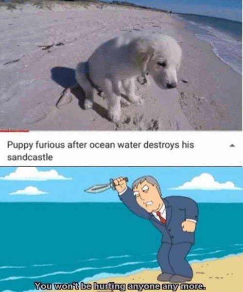 Destroys: Puppy furious after ocean water destroys his  sandcastle  You won't be hurting anyone any more
