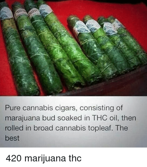 Best 420: Pure cannabis cigars, consisting of  marajuana bud soaked in THC oil, then  rolled in broad cannabis topleaf. The  best 420 marijuana thc