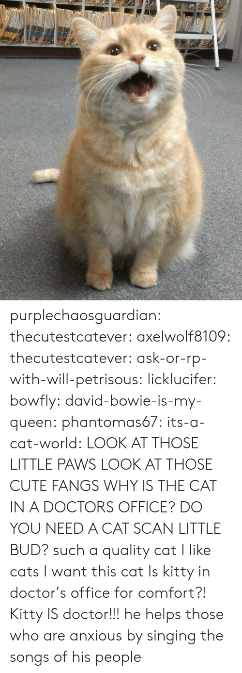 Cats, Cute, and David Bowie: purplechaosguardian: thecutestcatever:  axelwolf8109:   thecutestcatever:   ask-or-rp-with-will-petrisous:  licklucifer:  bowfly:  david-bowie-is-my-queen:  phantomas67:  its-a-cat-world:  LOOK AT THOSE LITTLE PAWS  LOOK AT THOSE CUTE FANGS  WHY IS THE CAT IN A DOCTORS OFFICE?  DO YOU NEED A CAT SCAN LITTLE BUD?  such a quality cat  I like cats  I want this cat    Is kitty in doctor's office for comfort?!   Kitty IS doctor!!!  he helps those who are anxious by singing the songs of his people
