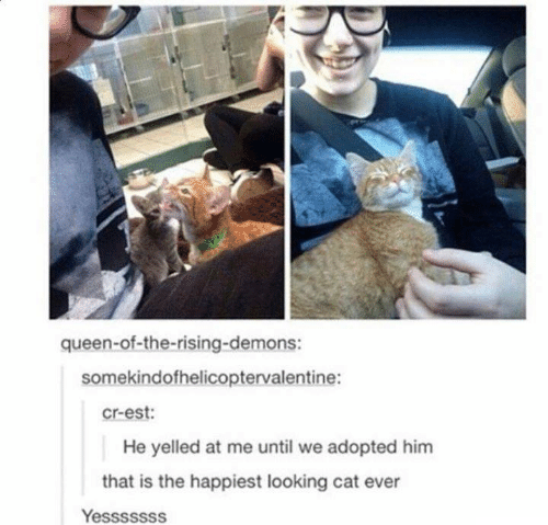Memes, Queen, and 🤖: queen-of-the-rising-demons:  somekindofhelicoptervalentine:  cr-est:  He yelled at me until we adopted him  that is the happiest looking cat ever  Yesssssss