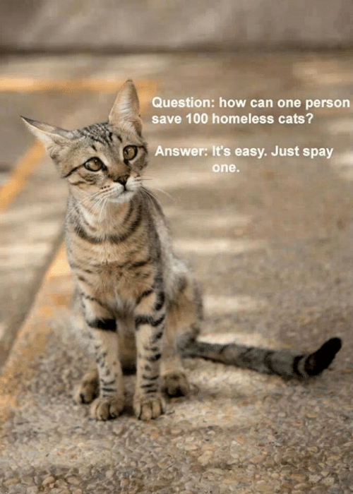 Spay: Question: how can one person  save 100 homeless cats?  Answer: It's easy. Just spay  one