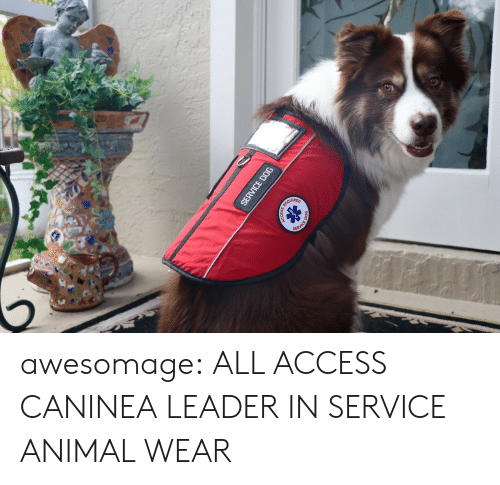 Amazon, Tumblr, and Access: QUIRED awesomage: ALL ACCESS CANINEA LEADER IN SERVICE ANIMAL WEAR