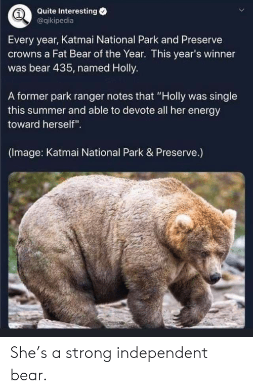 "preserve: Quite Interesting  @qikipedia  Every year, Katmai National Park and Preserve  crowns a Fat Bear of the Year. This year's winner  was bear 435, named Holly.  A former park ranger notes that ""Holly was single  this summer and able to devote all her energy  toward herself"".  (Image: Katmai National Park & Preserve.) She's a strong independent bear."