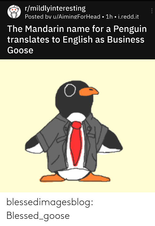 redd: r/mildlyinteresting  Posted bv u/AimingForHead • 1h • i.redd.it  The Mandarin name for a Penguin  translates to English as Business  Goose blessedimagesblog:  Blessed_goose