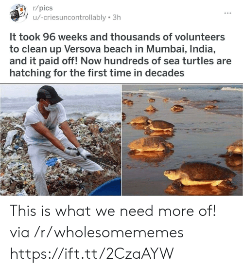 Beach, India, and Time: r/pics  u/-criesuncontrollably 3h  It took 96 weeks and thousands of volunteers  to clean up Versova beach in Mumbai, India,  and it paid off! Now hundreds of sea turtles are  hatching for the first time in decades This is what we need more of! via /r/wholesomememes https://ift.tt/2CzaAYW