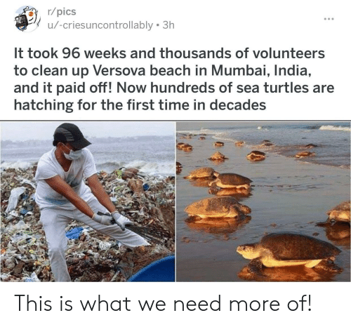 Beach, India, and Time: r/pics  u/-criesuncontrollably 3h  It took 96 weeks and thousands of volunteers  to clean up Versova beach in Mumbai, India,  and it paid off! Now hundreds of sea turtles are  hatching for the first time in decades This is what we need more of!