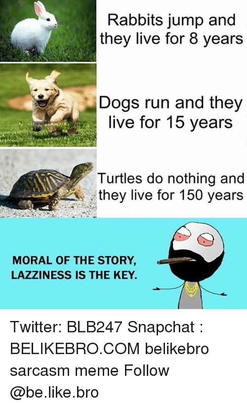 Sarcasmism: Rabbits jump and  they live for 8 years  Dogs run and they  live for 15 years  Turtles do nothing and  they live for 150 years  MORAL OF THE STORY  LAZZINESS IS THE KEY Twitter: BLB247 Snapchat : BELIKEBRO.COM belikebro sarcasm meme Follow @be.like.bro