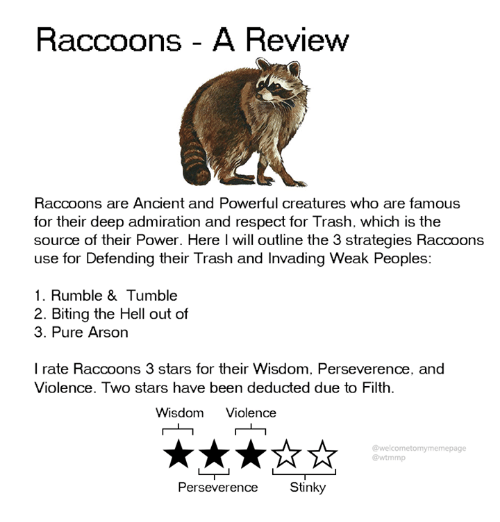 stinky: Raccoons - A Review  Raccoons are Ancient and Powerful creatures who are famous  for their deep admiration and respect for Trash. which is the  source of their Power. Here l will outline the 3 strategies Raccoons  use for Defending their Trash and Invading Weak Peoples:  1. Rumble & Tumble  2. Biting the Hell out of  3. Pure Arson  I rate Raccoons 3 stars for their Wisdom. Perseverence, and  Violence. Two stars have been deducted due to Filth.  Wisdom Violence  @welcometomymemepage  @wtmmp  Perseverence Stinky