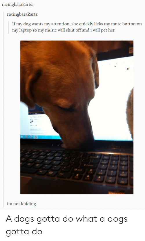 Music, Mute, and Laptop: racingbarakarts  racingbarakarts  If my dog wants my attention, she quickly licks my mute button on  my laptop so my music will shut off and i will pet her  im not kidding A dogs gotta do what a dogs gotta do
