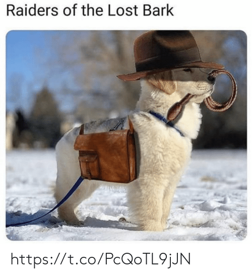 Memes, Lost, and Raiders: Raiders of the Lost Bark https://t.co/PcQoTL9jJN