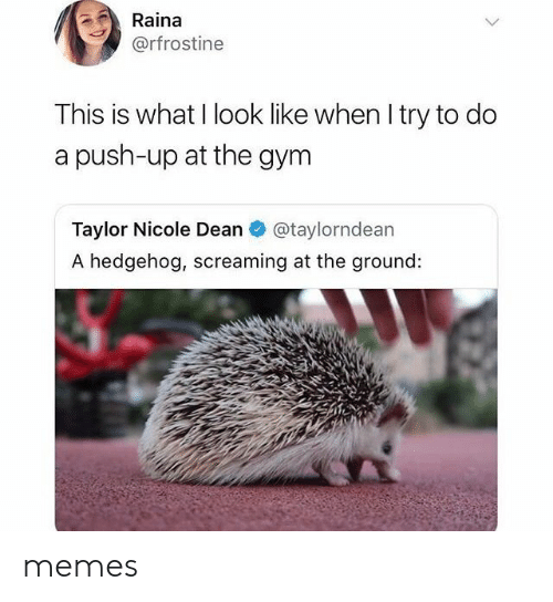 Hedgehog: Raina  @rfrostine  This is what I look like when I try to do  a push-up at the gym  Taylor Nicole Dean  @taylorndean  A hedgehog, screaming at the ground: memes
