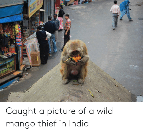 India, Mango, and Wild: RAJE AUY Caught a picture of a wild mango thief in India