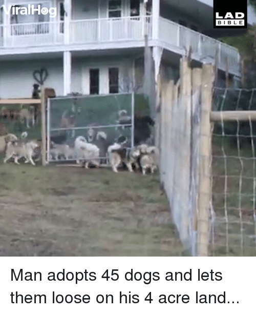 acre: ralHo  LAD  BIBLE Man adopts 45 dogs and lets them loose on his 4 acre land...