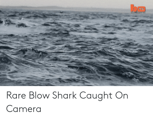 caught on camera: Rare Blow Shark Caught On Camera