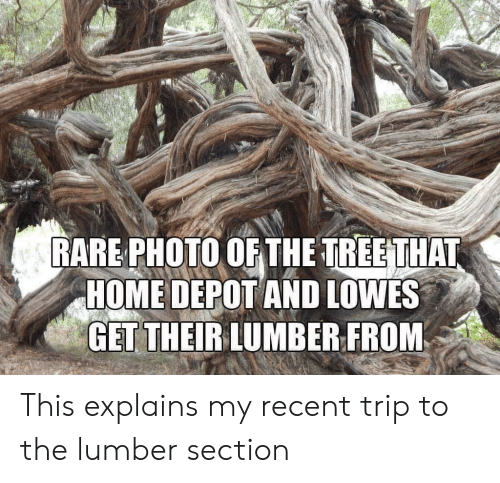 Depot: RARE PHOTO OF THE TREETHAT  HOME DEPOT AND LOWES  GET THEIRLUMBER FROM This explains my recent trip to the lumber section