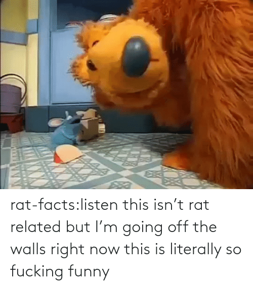 going off: rat-facts:listen this isn't rat related but I'm going off the walls right now this is literally so fucking funny