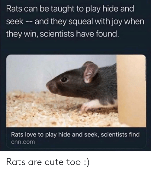 cnn.com, Cute, and Love: Rats can be taught to play hide and  seek -- and they squeal with joy when  they win, scientists have found.  Rats love to play hide and seek, scientists find  cnn.com Rats are cute too :)
