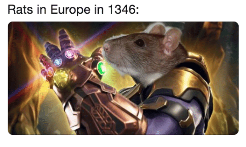 Europe and  Rats: Rats in Europe in 1346: