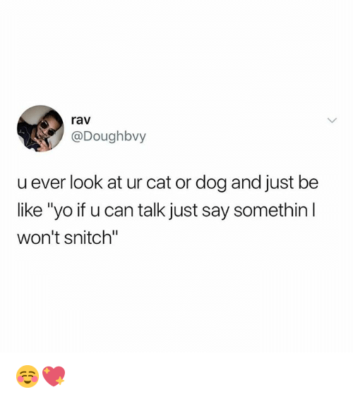 "cat-or-dog: rav  @Doughbvy  u ever look at ur cat or dog and just be  like ""yo if u can talk just say somethin  won't snitch"" ☺️💖"
