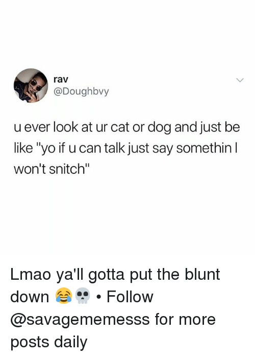 "cat-or-dog: rav  @Doughbvy  u ever look at ur cat or dog and just be  like ""yo if u can talk just say somethin l  won't snitch"" Lmao ya'll gotta put the blunt down 😂💀 • Follow @savagememesss for more posts daily"