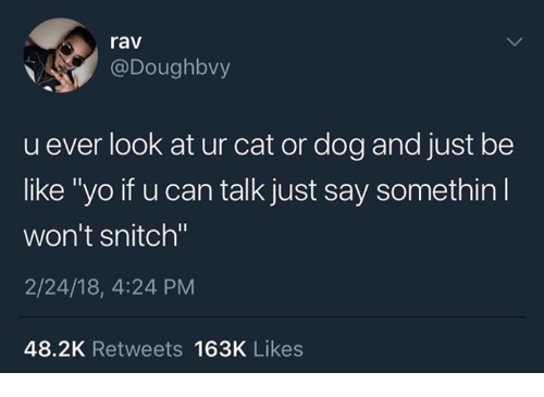 "cat-or-dog: rav  @Doughbvy  u ever look at ur cat or dog and just be  like ""yo if u can talk just say somethin  won't snitch""  2/24/18, 4:24 PM  48.2K Retweets 163K Likes"